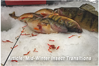image links to Perch fishing article