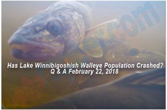 image links to walleye report