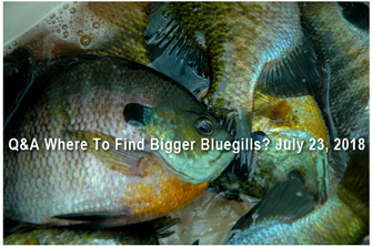 image links to bluegill fishing article