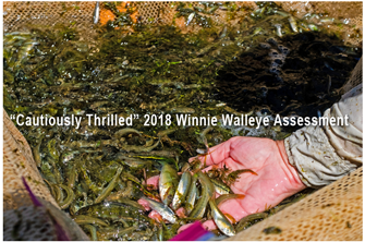 image links to walleye assessment