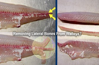 image links to Question about cleaning walleye fillets