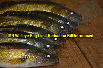 image links to article about bill to reduce walleye bag limit in minnesota