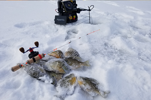 image links to Central Minnesota Fishing Report